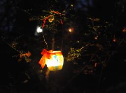 La Magia del bosco di notte 2016